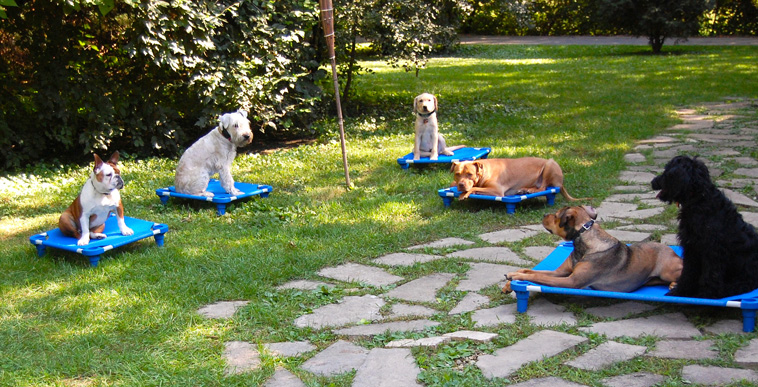 Chicago Dog Trainer | Canine Peace of Mind