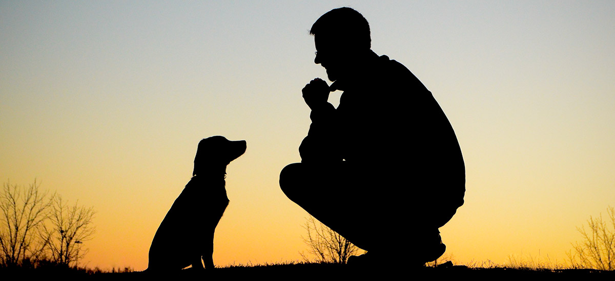 Canine Peace of Mind | Creating Instinctual Relationships for Life