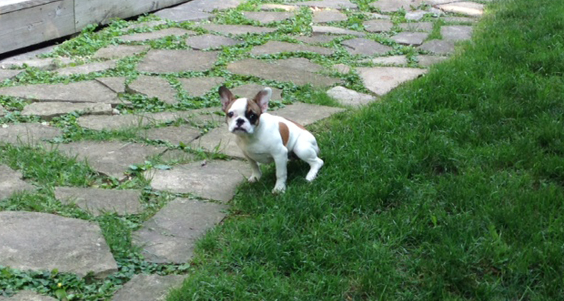 Puppy-Potty-Training-Blog-Canine-Peace-of-MInd